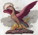 250px-phoenix-bertuch.jpg